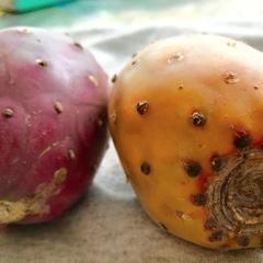 La Tuna - Prickly Pear
